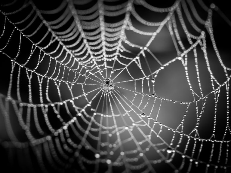 Dar spider web representing the dark web accessed by Tor browser and used by hackers