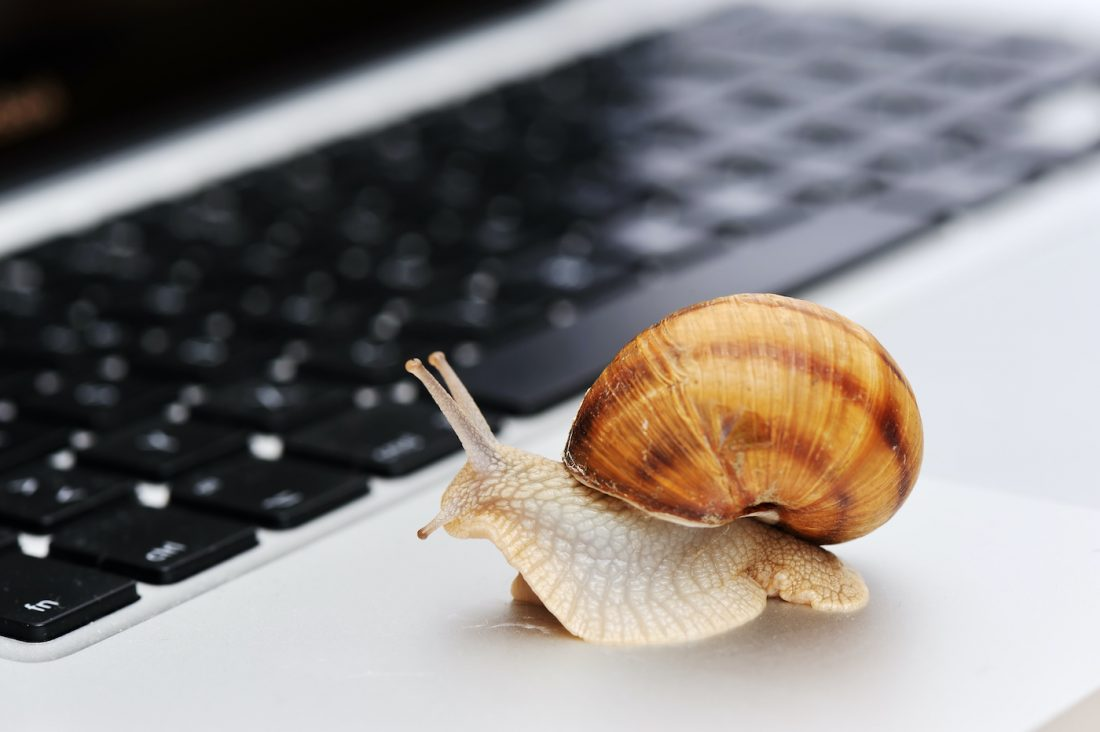 Snail on a MacBook Air keyboard. Is your Mac (or PC) Running Slowly?
