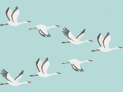 Graphic of a flock of birds migrating representing a migration from one email service to another for your business email platform.